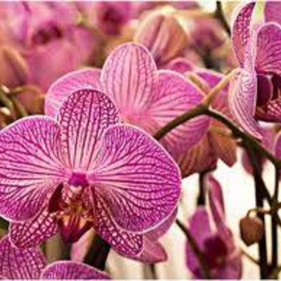 Orchideen verzorgen