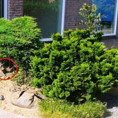 Welke plantenbomen zijn dit
