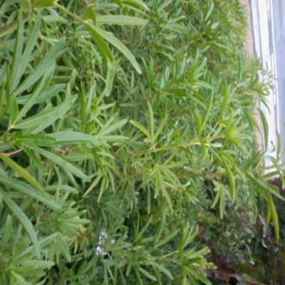 Welke plant is dat