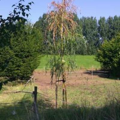 Bomen online.nl