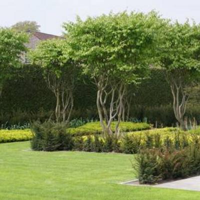 Welk soort bomen