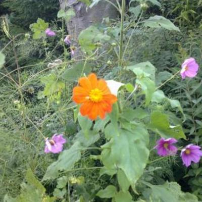 Bloemenzee en boeren en boerinnen plant