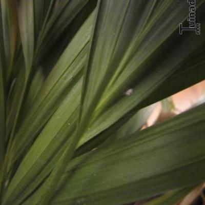 Witte vlekjes op mijn plant