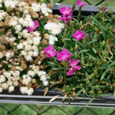 Onbekende bloemen