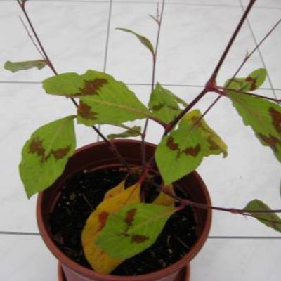 Welke plant is dit en hoe is de verzorging