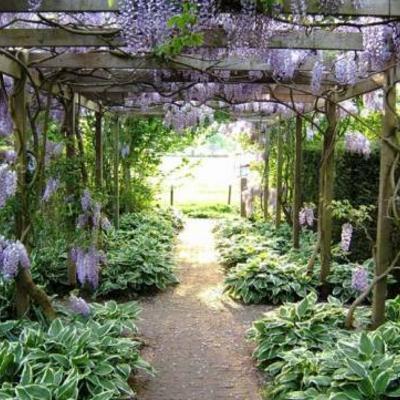 Schaduwrijke plek voor plant