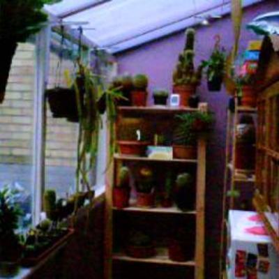 Enkele fotos van mijn cactussen in mijn veranda