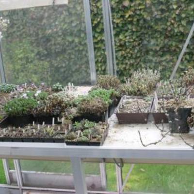 Dringend gratis afhalen laatste planten  potten