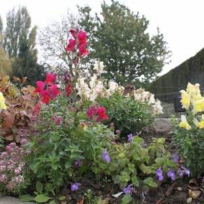 Wat er nu nog bloeit in mijn tuin
