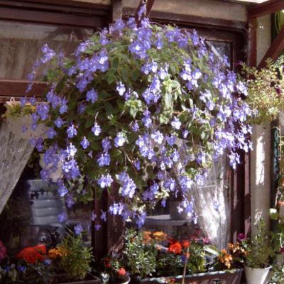 Welke bloemen vensterbloembakken