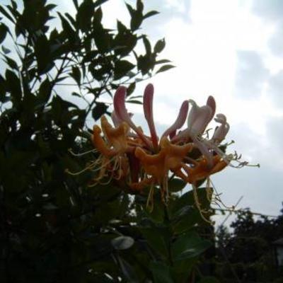 Enkele bloemen uit de tuin