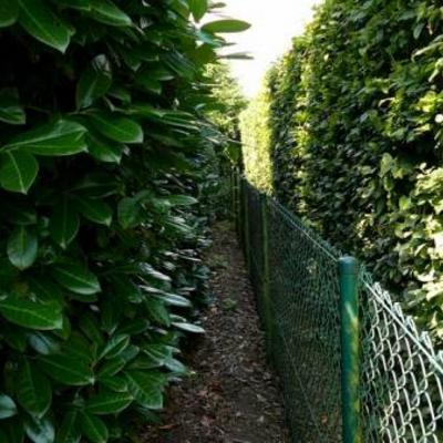 Leibomen met onderbeplanting als afscheiding