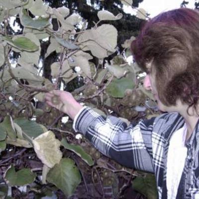 Kiwi Jenny BoskoopSolo enz enz