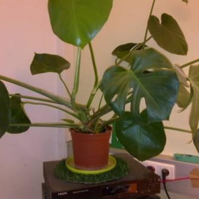 Welke plant is dit aub en kan ze gestekt worden