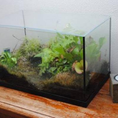 Tropische planten in aquarium