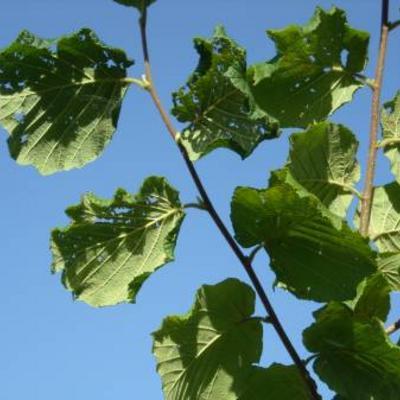 Gaatjes in bladeren plant