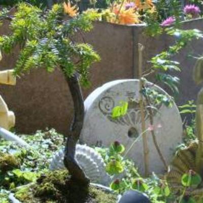 Bonsai verzorging