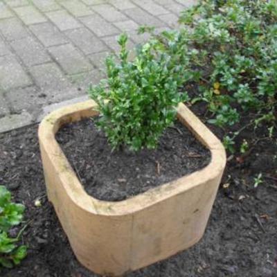 Buxusbollen kweken