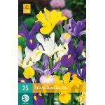 Iris hollandica mix (25 stuks)