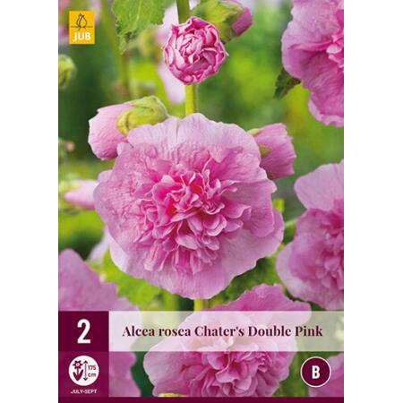 Alcea rosea 'Chater's Double Pink'