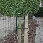 Tree-fix boombinder 23 cm (20 stuks)