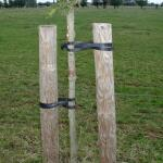 Tree-fix boombinder 50 cm/15 mm
