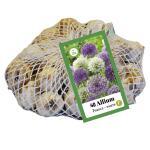 Allium paars/wit voor 1 m² (40 stuks)