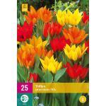 Tulpenmix Praestans (25 stuks)