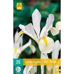 Iris hollandica - wit (25 stuks)