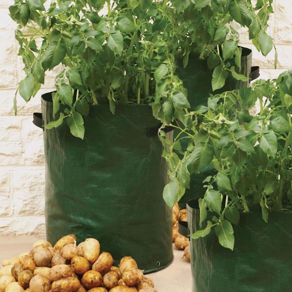 Aardappel kweekzak zak om aardappelen in te kweken op terras of balkon - Groenten in potten op balkons ...