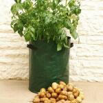 Aardappel kweekzak groen (3 stuks)