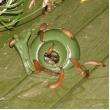 een slakkenval plaatsen - slakken vangen in de tuin