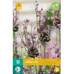 Allium Art - sierui