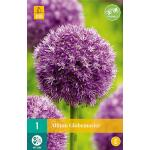 Allium Globemaster sierui - 1 stuk