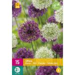 Allium Paars/Wit Mix - sierui