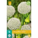 Allium White Cloud - sierui