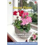 Alpenviool royal mini mix - Cyclamen persicum