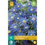 Anemone blanda 'Blue Shades' - anemoon (15 stuks)