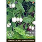Aubergine White Eggs - Solanum melongena