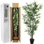 Bamboe in pot - 90 x 155 cm