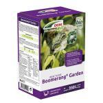 Boomerang garden insecticide tegen buxusmotrupsen - DCM 50 ml