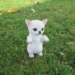 Chihuahua witte puppy