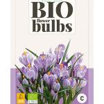 Crocus 'King of the striped' - bio flowerbulbs (10 stuks)