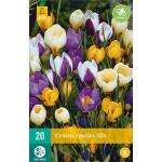 Crocus species mix - kleinbloemige crocus mix (20 stuks)