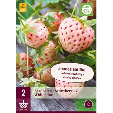 Fragaria White Pine