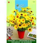 Gele ganzebloem - Chrysanthemum segetum