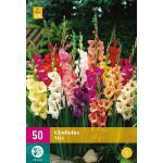 Grootbloemige gladiolen mix