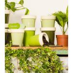 Plantenstekers in groentinten