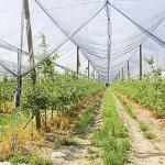 Hagelnet 2 x 10 meter - groen
