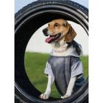 Hondenjas met kap Boston Amiplay - grijs